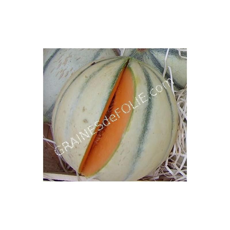MelonCHARENTAIS