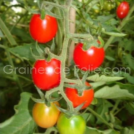 Tomatecerise CILIEGIA