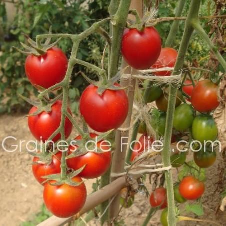 Tomate DE BERAO - BIO *