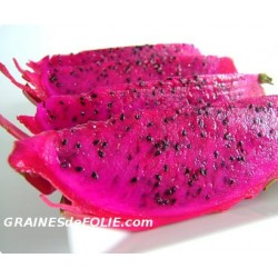 Fruit du DRAGON Rose