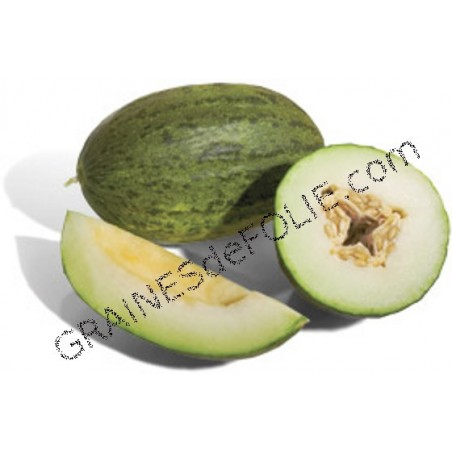 «PELE DE SAPO» Melon