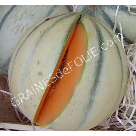 «CHARENTAIS» Melon