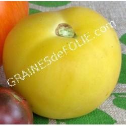 «PECHE JAUNE» Tomate