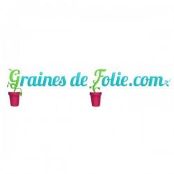 «BRANDYWINE NOIRE» Tomate noire