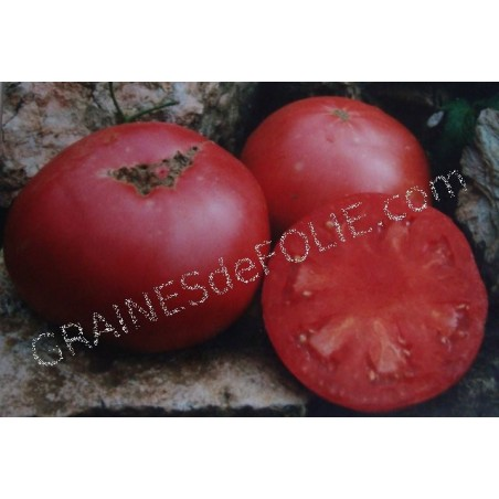 « PRUDEN 'S PURPLE » Tomate
