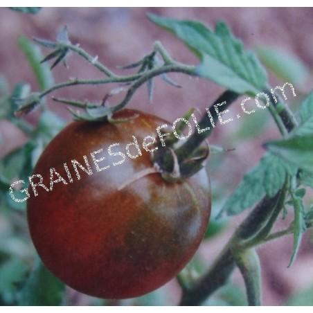 « PRINCE NOIR» Tomate