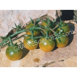 « RAISIN VERT» Tomate cerise