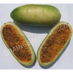 Curuba - Passiflora mollisima