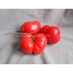 TomateGéante BELGE