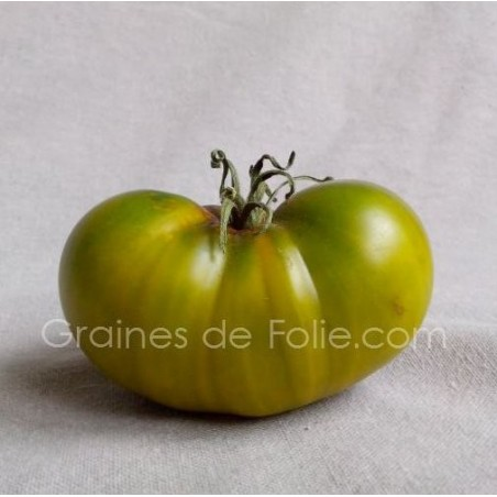 Tomate EVERGREEN