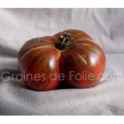 Tomate CHOCOLATE STRIPES