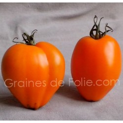 Tomate COEUR de BOEUF ORANGE