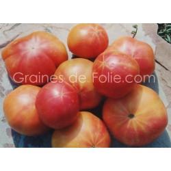 Tomate ALLEMANDE DOREE