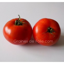 Tomate LANGUEDOCIENNE