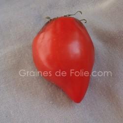 Tomate TETON de VENUS