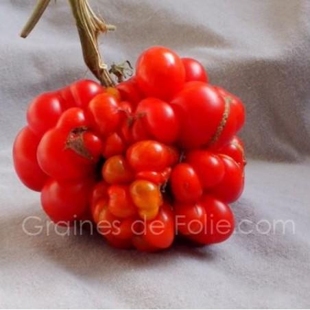 TomateVOYAGE