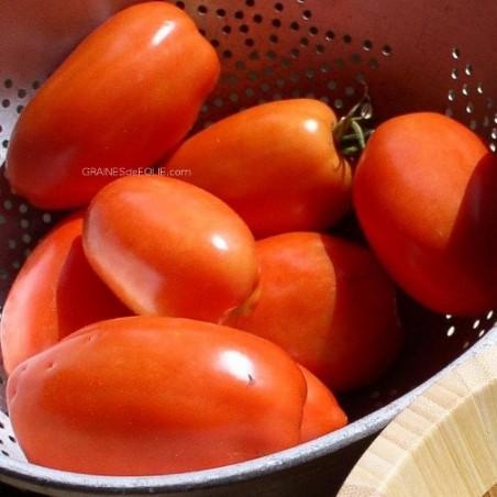 TomateROMA