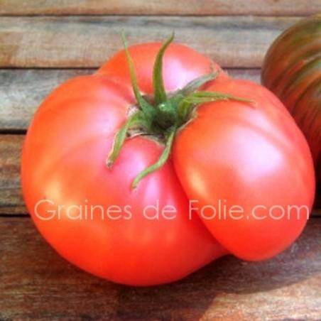 TomateROSE de BERNE
