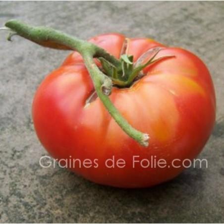 TomateBRANDYWINE ROUGE BIO