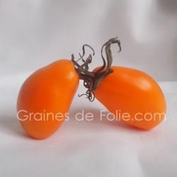 Tomate ORANGE BANANA