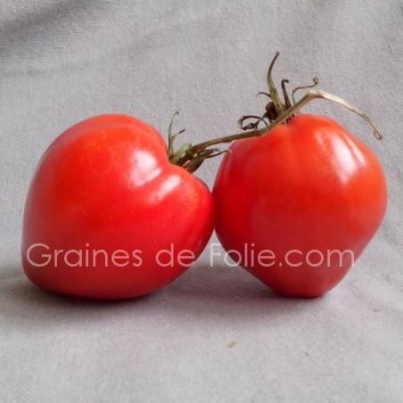 TomateCUOR DI BUE