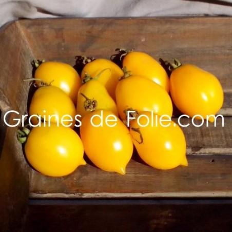 Tomate CITRON RUSSE- Lemon plum ou Wonderlight