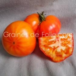 TomateMR STRIPEY