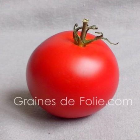 TomateMONEYMAKER