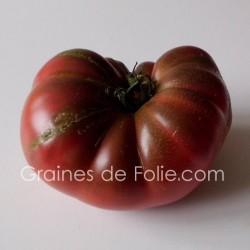 TomateCHEROKEE PURPLE