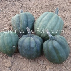 Courge REINE de la TABLE