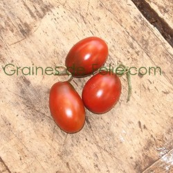 Tomate PRUNE NOIRE