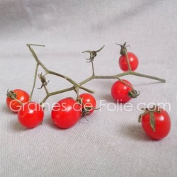 Tomate BARBANIAKA