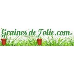 Graines - sporesFougère Arborescente Noire «Cyathea Medullaris»