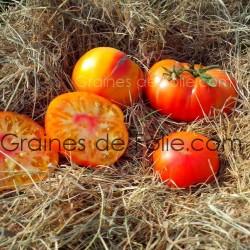 Graines de Tomate ALLEMANDE DOREE - BIO *