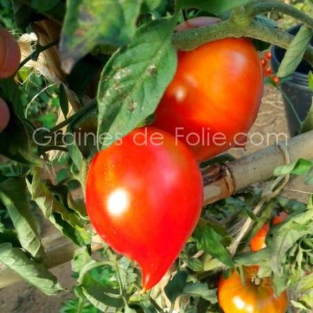 Graines de Tomate TETON de VENUS - BIO *