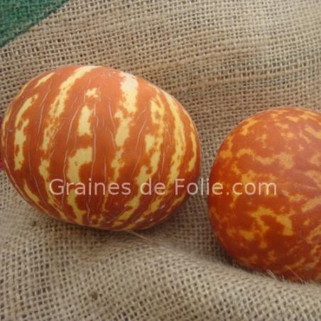 Graines de MelonTIGRE