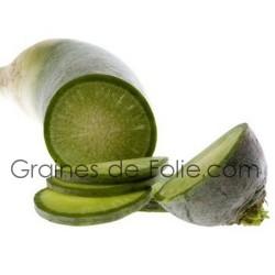 Radis GREEN MEAT