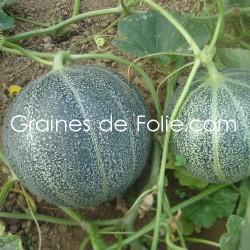 MelonPETIT GRIS de RENNES - BIO *