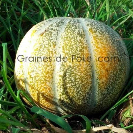 MelonVIEILLE FRANCE graines semences anciennes certifiées bio