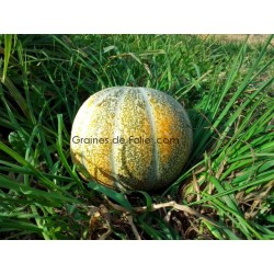 Melon ANCIEN VIEILLE FRANCE - BIO *