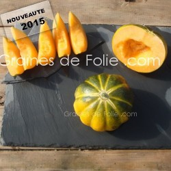 MelonNOIR DES CARMES graines semences anciennes bio hâtif précoce sucré