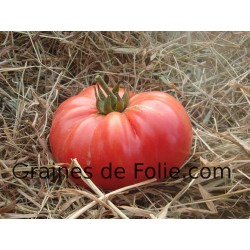 TomateBURPEE DELICIOUS
