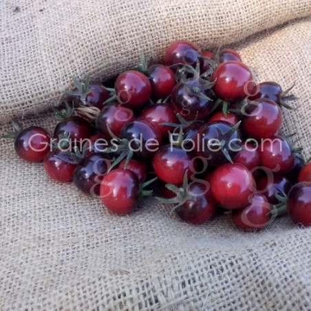 Tomate cerise INDIGO BLUE BERRIES - Graines seeds