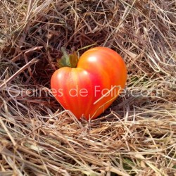 Tomate OXHEARD STRIEPED