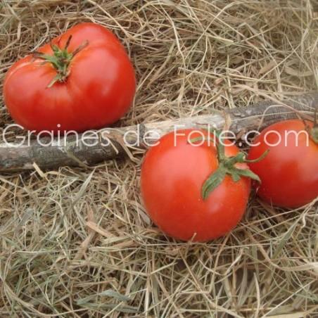 Tomate CASAQUE ROUGE