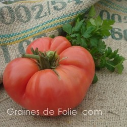 Tomate GERMAN JOHNSON