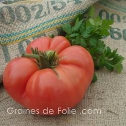 Tomate GERMAN JOHNSON