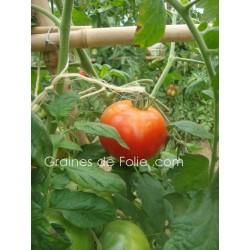Tomate MERVEILLE DES MARCHES - BIO *