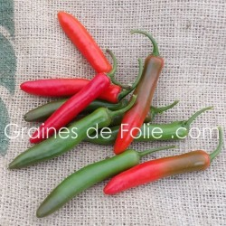 Piment SERRANO TAMPIQUENO Graines pepper seeds