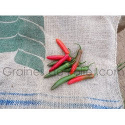 Piment SERRANO TAMPIQUENO - SERRANO TAMPEQUINO - Graines pepper seeds